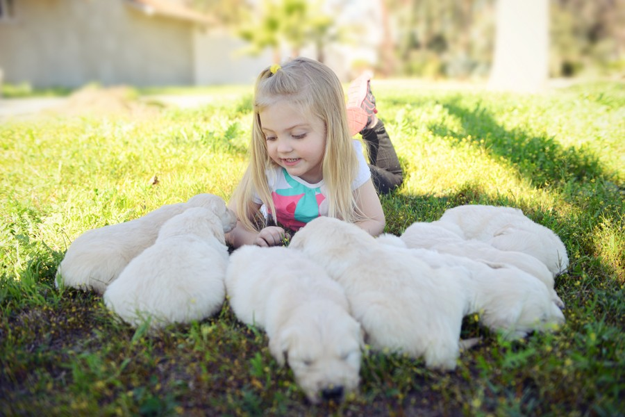 Johanna with Golden Retriever Puppies
