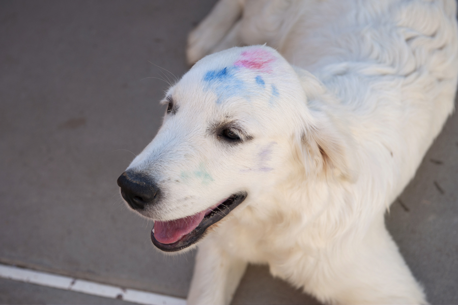 Daughter paints dog when not looking.