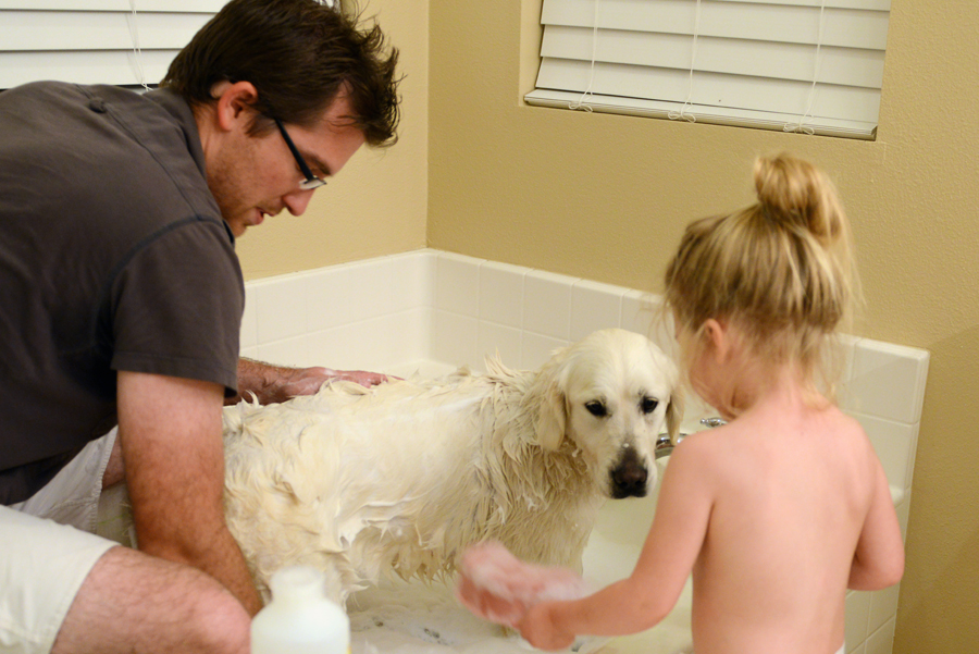 Getting a pet from another country results in a bath