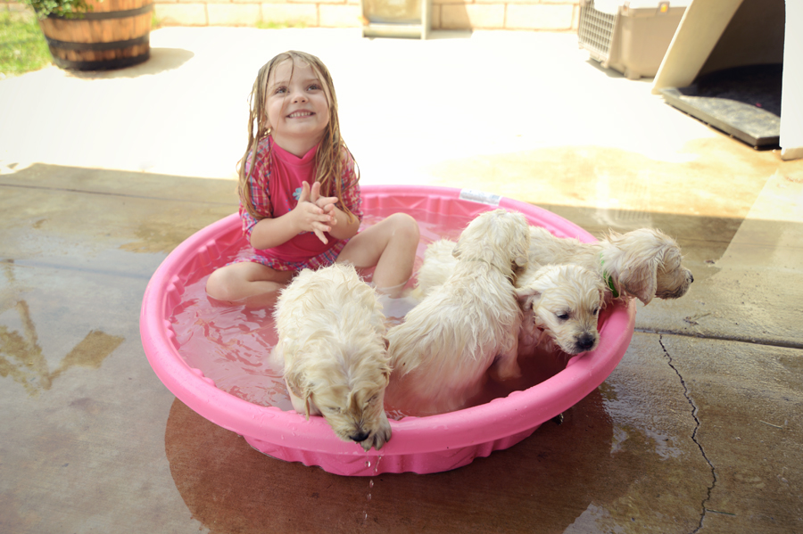 Puppies in the pool for first time.