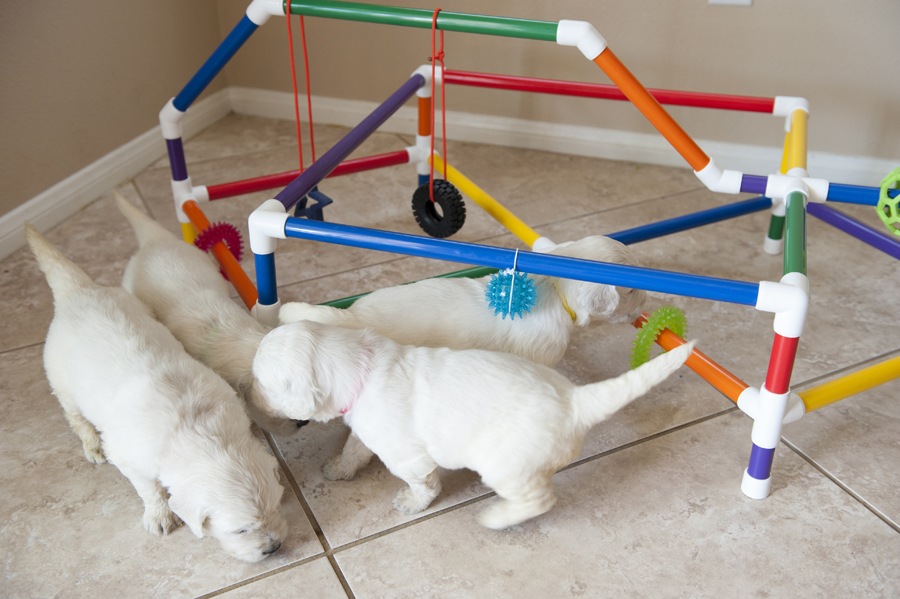 puppies playing in puppy play gym