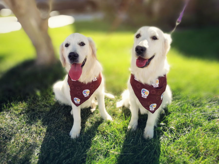 Ember and Alice groom for dog show.